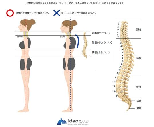 理想的な身体のライン